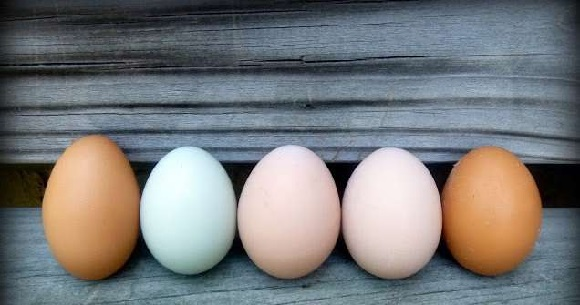 Fasting day on eggs.